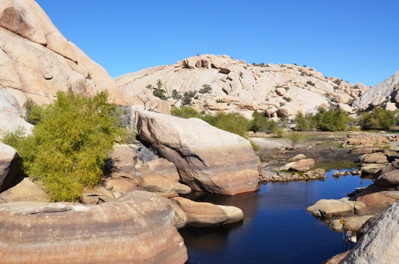 Wasserstelle im Joshua Tree NP