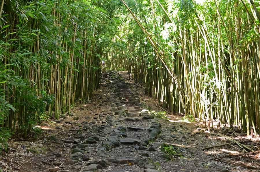 Bambusweg am ende des Highway to Hana
