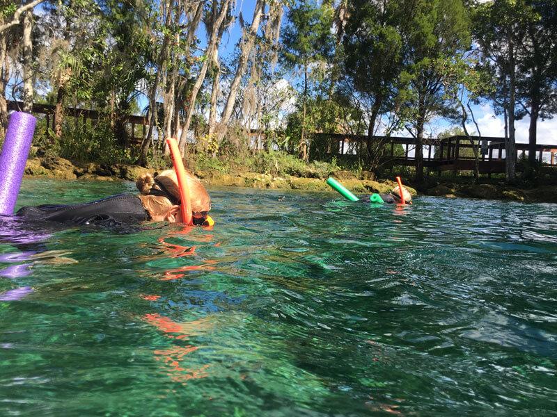Mit Manatees schwimmen und schnorcheln