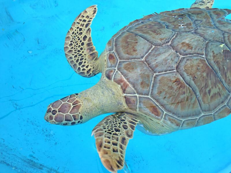 Schildkröten Krankenhaus auf den Keys in Florida