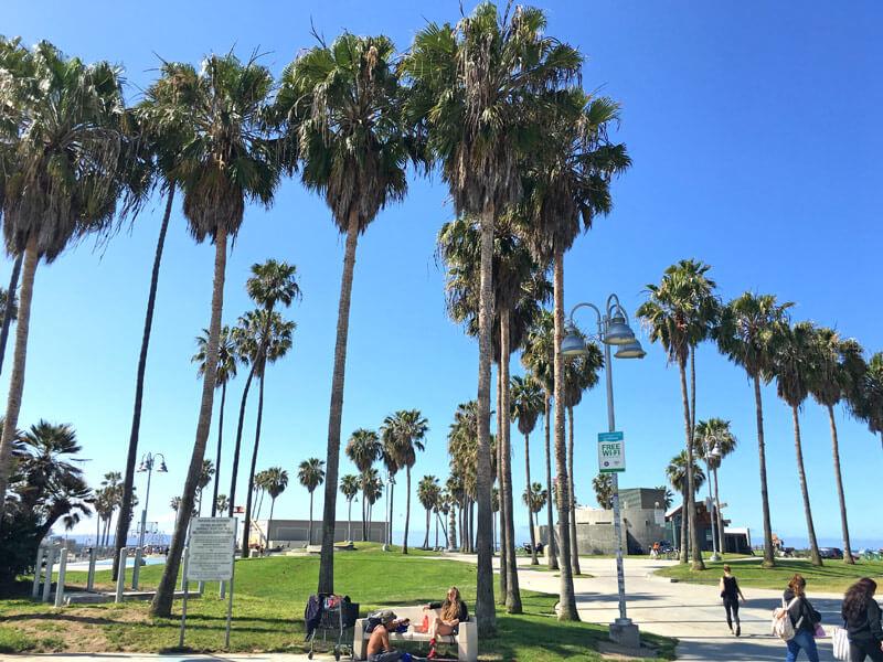 Venice Beach Palmen