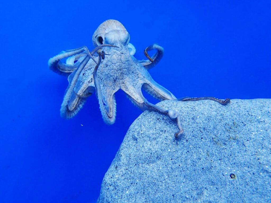 Octopus Farm auf Big Island