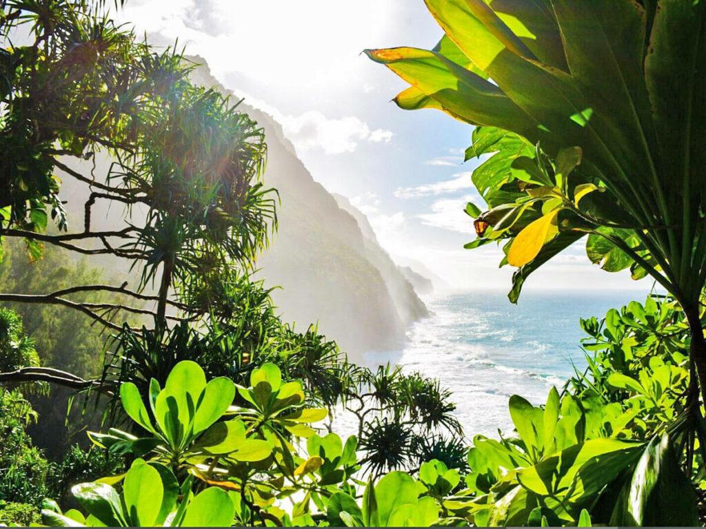 Sonnenschein auf dem Kalalaut Trail auf Kauai