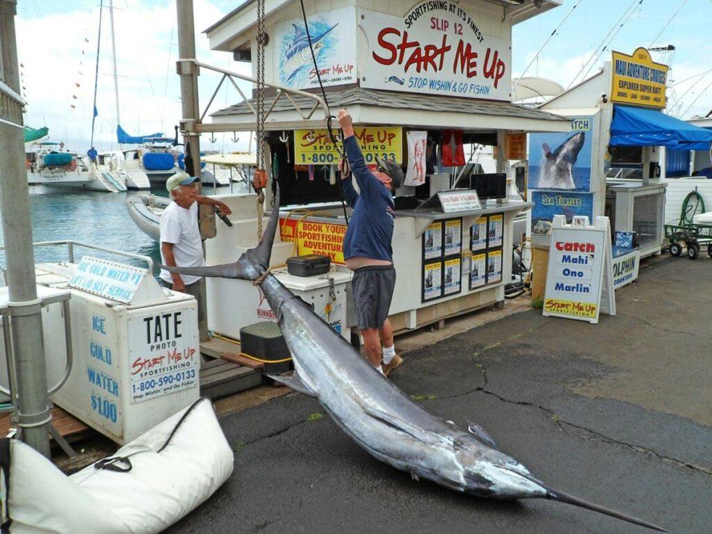 Schwertfisch gefangen in Lahaina in Maui