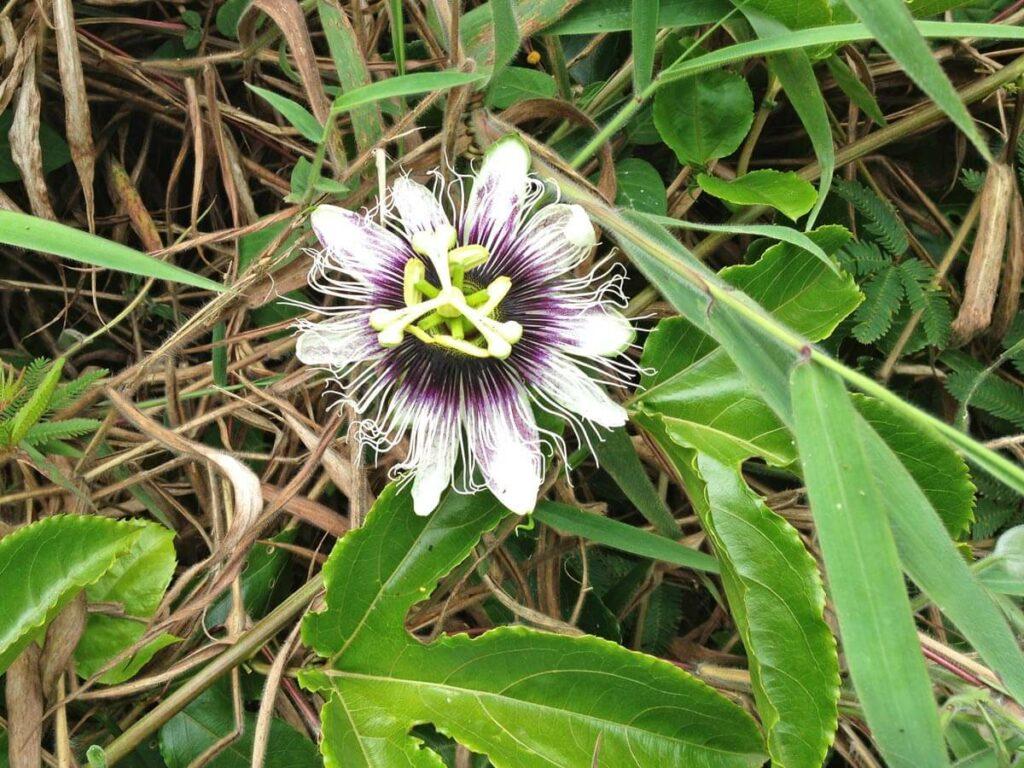 Schöne Pflanze auf einer geführten Tour durch den Regenwald auf Maui