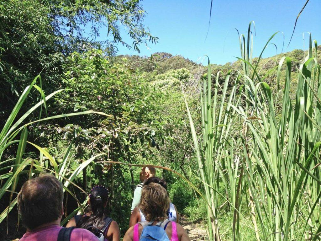 Regenwald Wanderung auf Maui