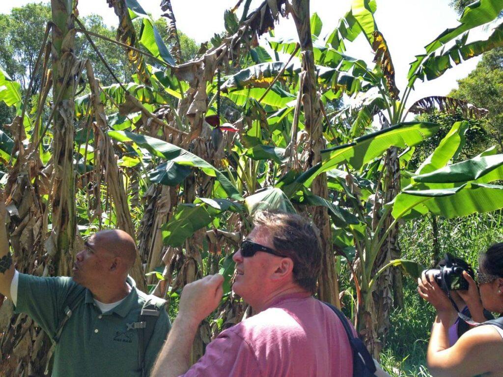 Guide erklärt auf der Regenwald Wanderung auf Maui die Natur