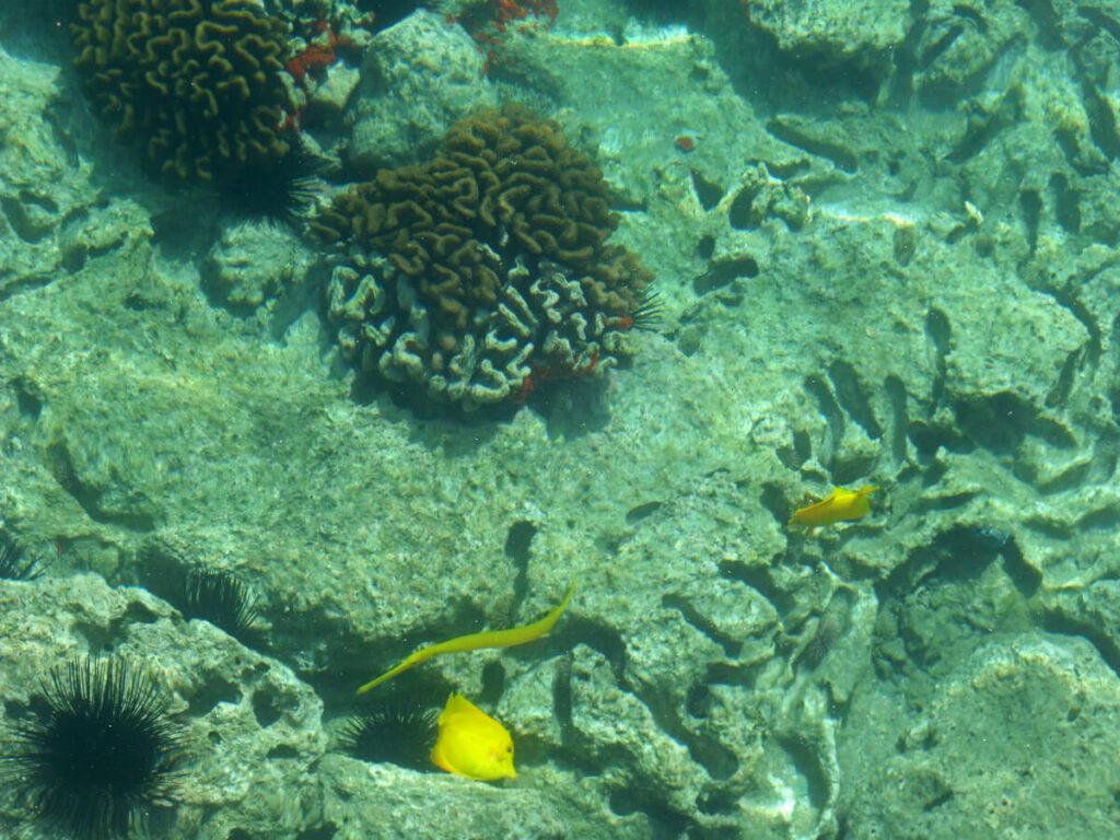 Unterwasseraufnahmen in der Hanauma Bay
