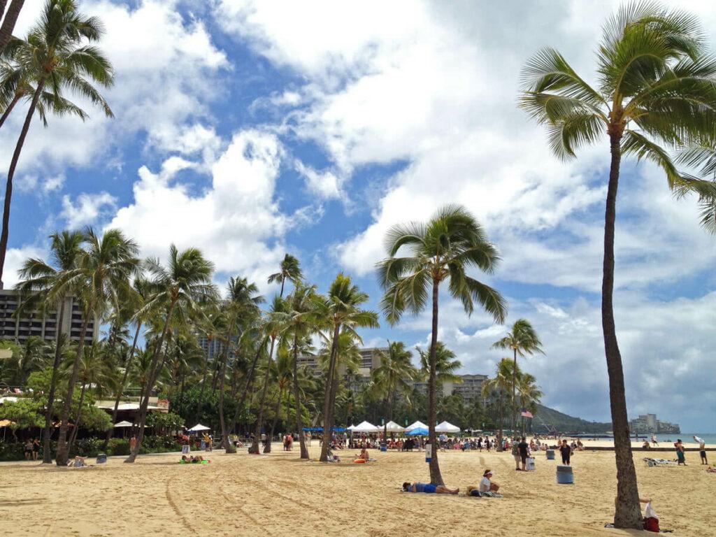 Palemen am Waikiki Beach
