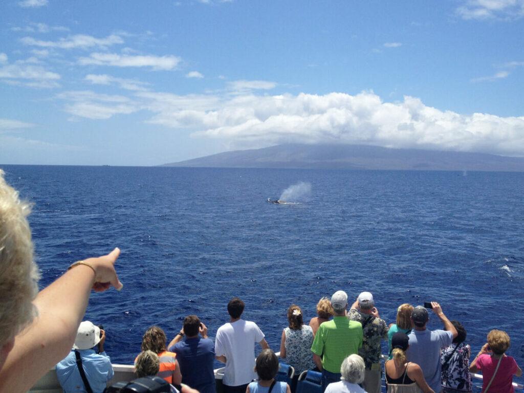 Walsichtung auf einer Maui Tour