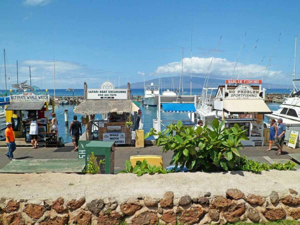 Hafen in Maui vor der Wale beobachten Tour