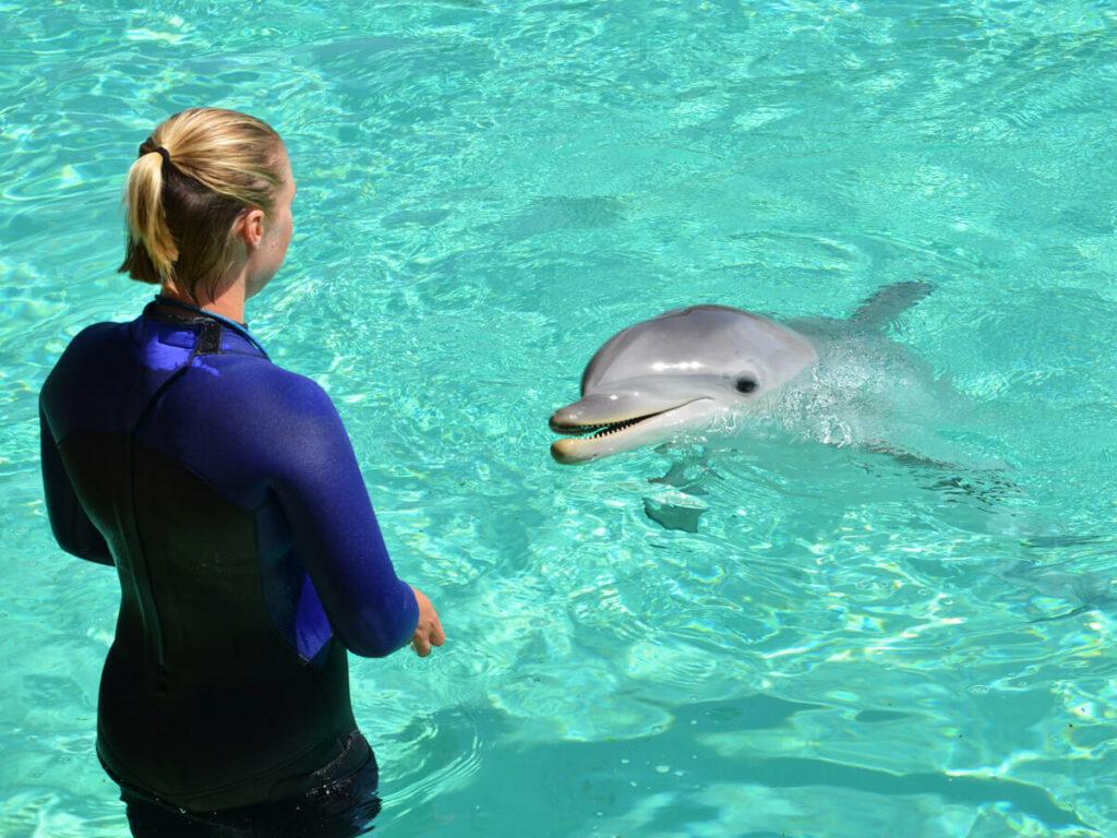 Trainerin mit Depfine im Seaworld San Diego