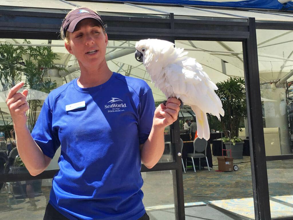 Papagie auf der Hand einer Mitarbeiterin in Seaworld San Diego