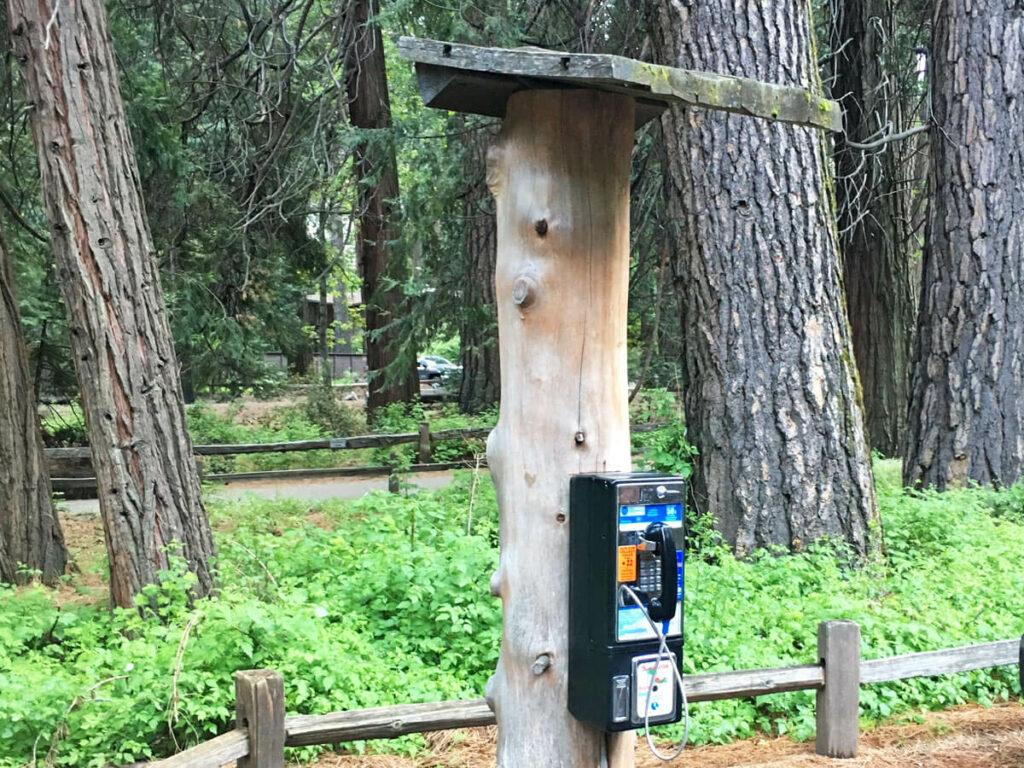 Telefonzelle am Baumstamm im Yosemite NP