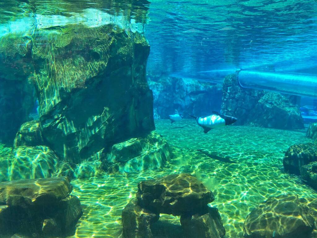 Aquarium mit zwei kleinen Orcas im Aquatica