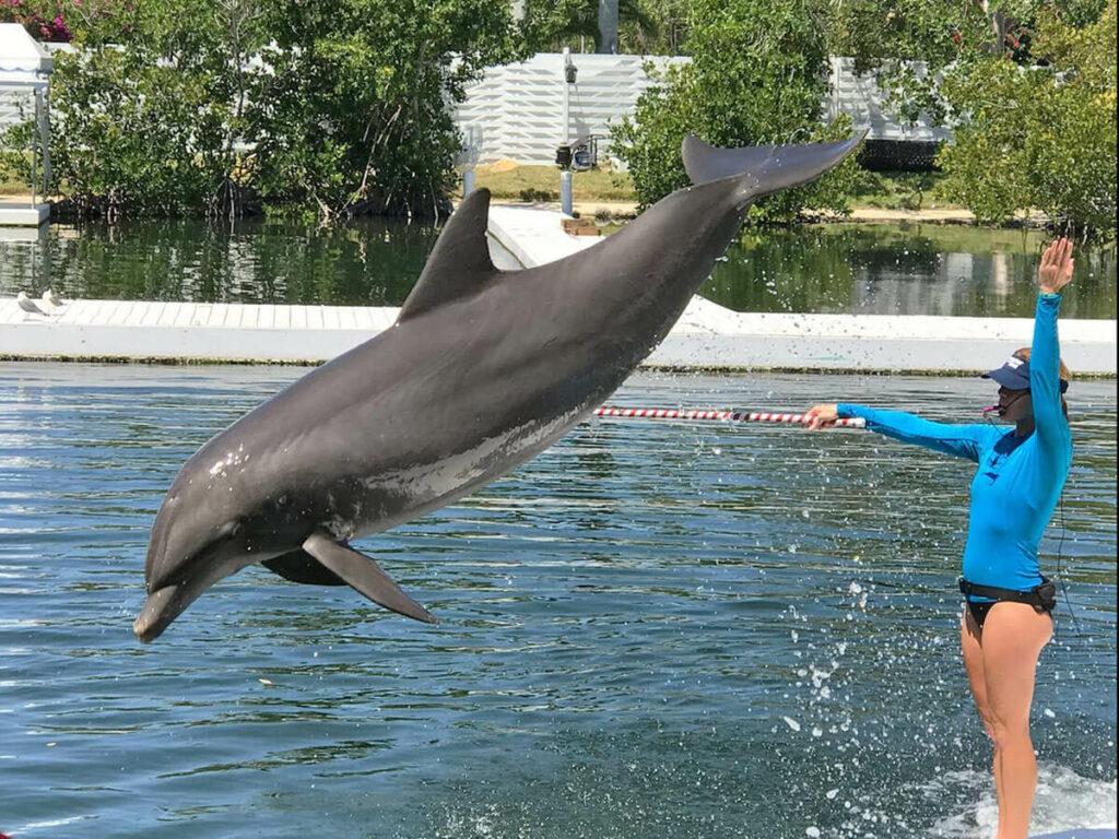 Delfin springt aus dem Wasser