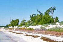 Schönster Strand auf den Keys in Florida