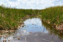 Everglades NP Sumpflandschaft
