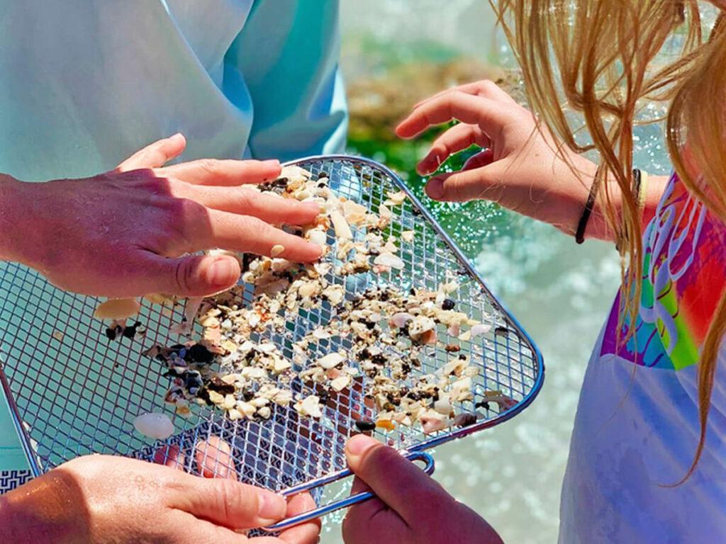Haifischzähne sammeln in Florida