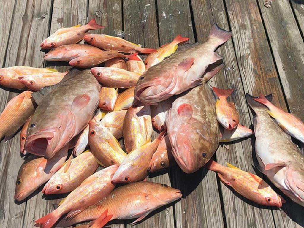 Fischfang nach einer Hochsee Tour in Florida