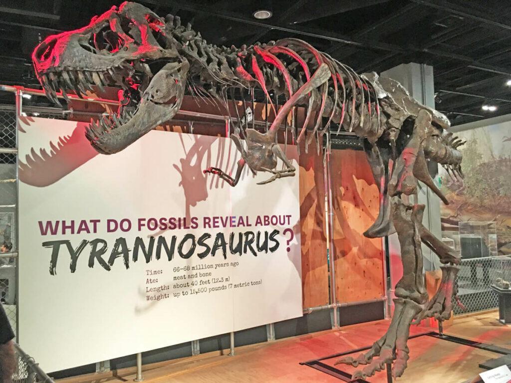 Tyrannosaurus im Natural History Museeum