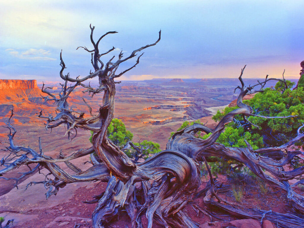 Blick ins Island in the Sky im Canyonlands