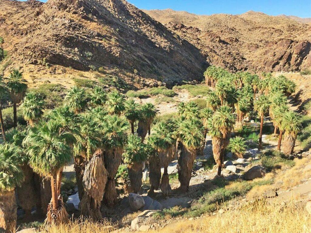 Indian Canyons südlich von Palm Springs
