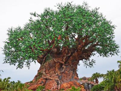 Disney Animal Kingdom in Florida