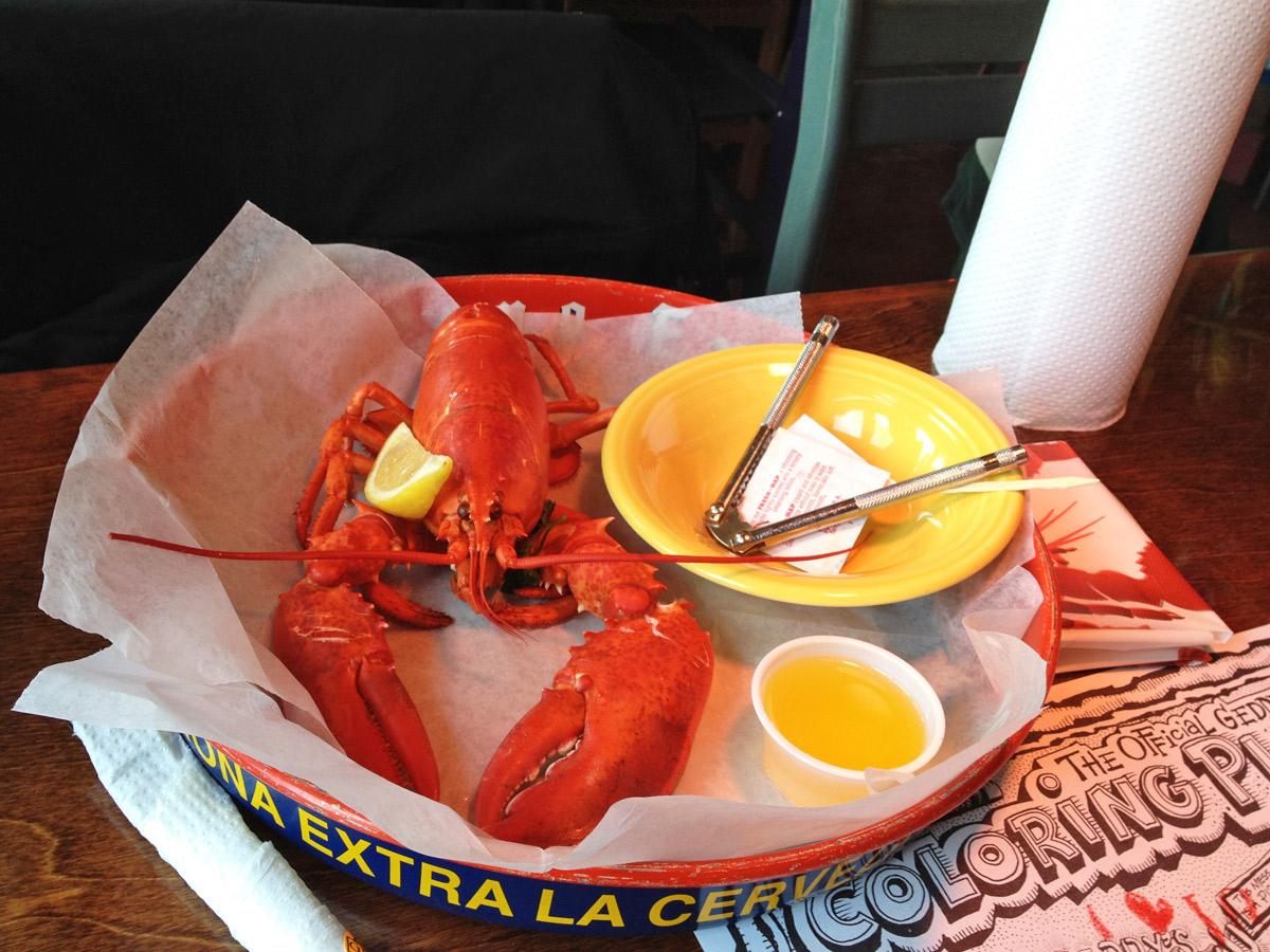 Main Lobster direkt aus dem Wasser